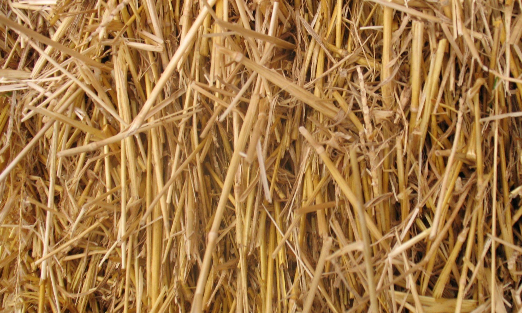 AgriWaste Energy